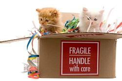 Packing Supplies: The Most Important Things to Buy When Moving House